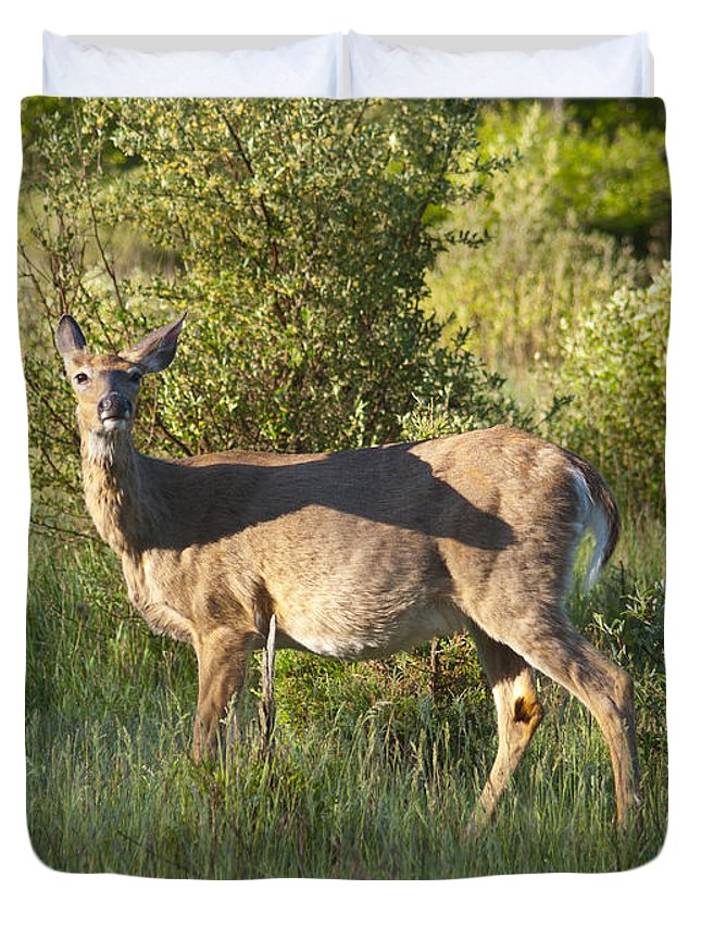 Whitetail Duvet Cover featuring the photograph Where Is The Maternity Ward 5969 by Michael Peychich