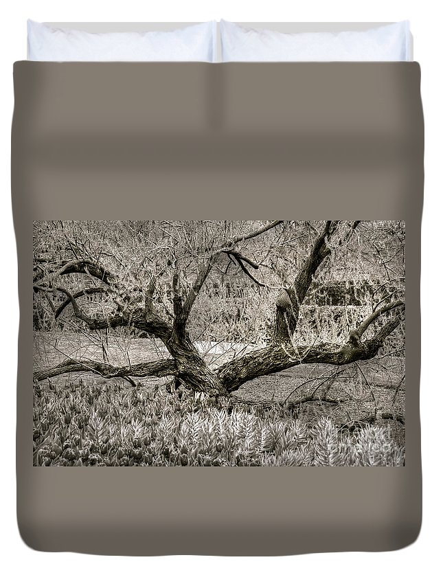 Tree Duvet Cover featuring the photograph Whisper by Debbi Granruth