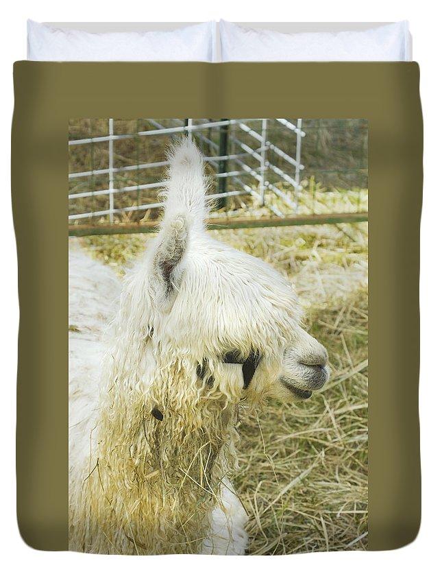 Alpaca Duvet Cover featuring the photograph White Alpaca Photograph by Keith Webber Jr