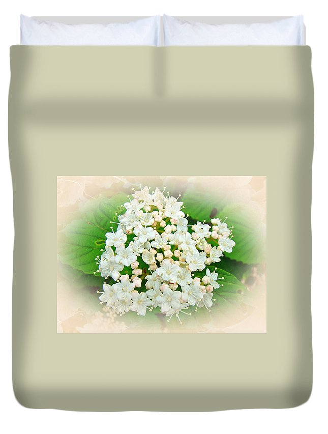 Hydrangea Duvet Cover featuring the photograph White And Cream Hydrangea Blossoms by Mother Nature
