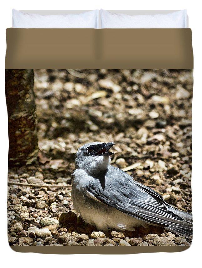 White-bellied Cuckoo-shrike Duvet Cover featuring the photograph White-bellied Cuckoo-shrike by Douglas Barnard
