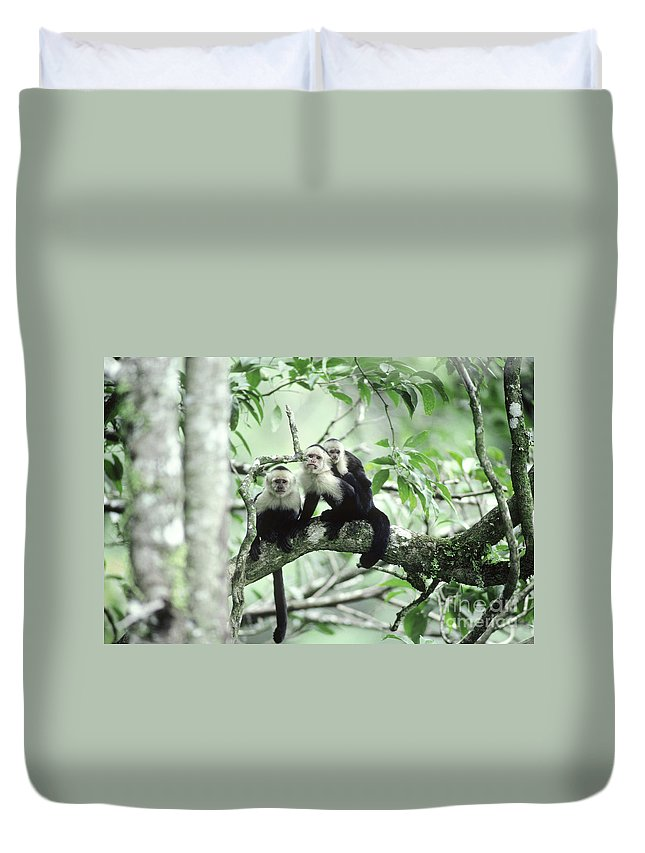 Fauna Duvet Cover featuring the photograph White-faced Capuchins by Gregory G Dimijian MD