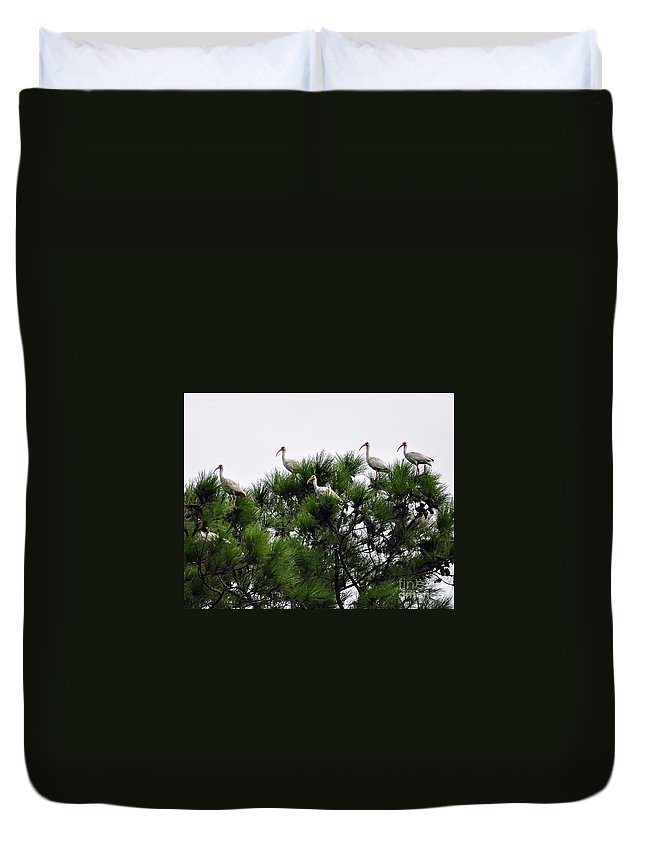 Ibis Duvet Cover featuring the photograph White Ibises Roosting by Al Powell Photography USA