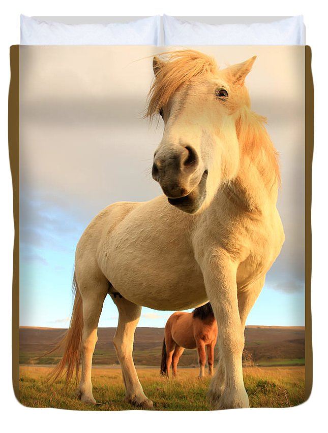 Light Duvet Cover featuring the photograph White Icelandic Horse, Iceland by Robert Postma
