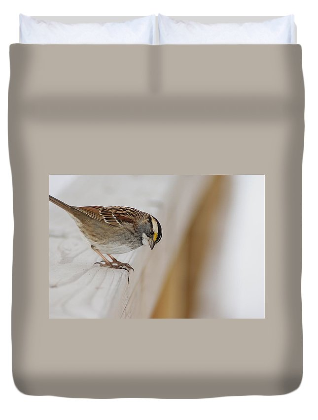 White Duvet Cover featuring the photograph White Throated Sparrow by Joe Faherty