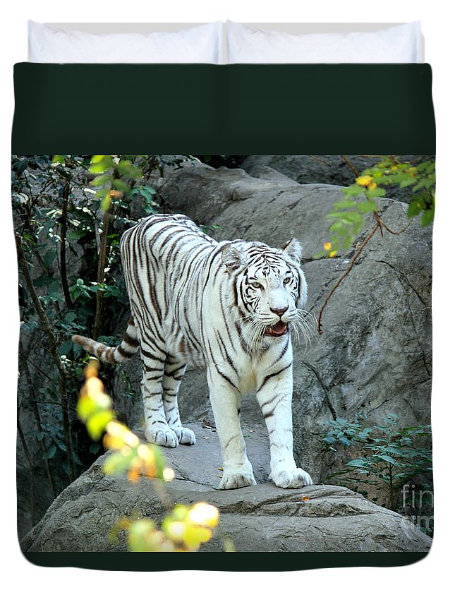 White Tiger Duvet Cover featuring the photograph White Tiger by Kathy White
