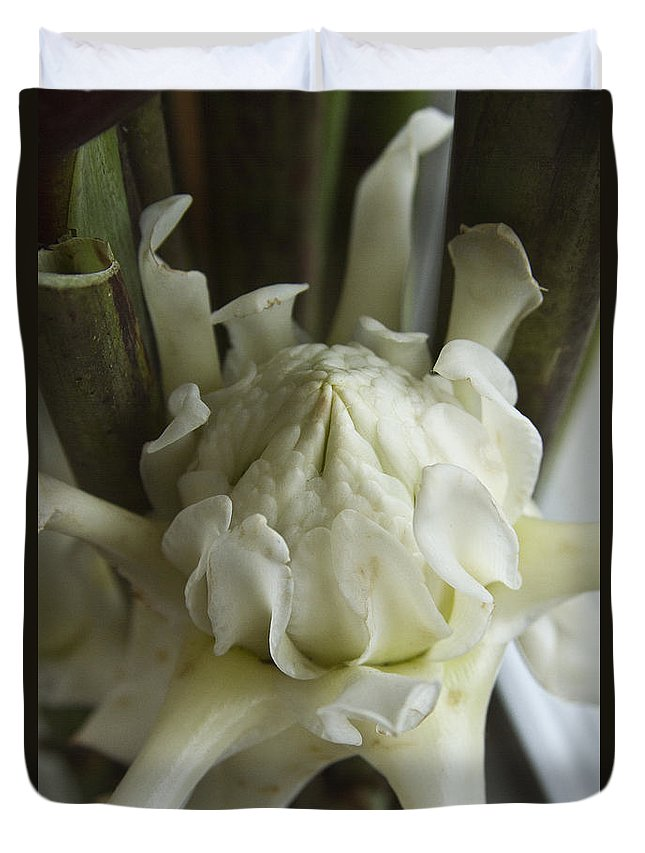 Ginger Flower Duvet Cover featuring the photograph White Torch Ginger by Heiko Koehrer-Wagner