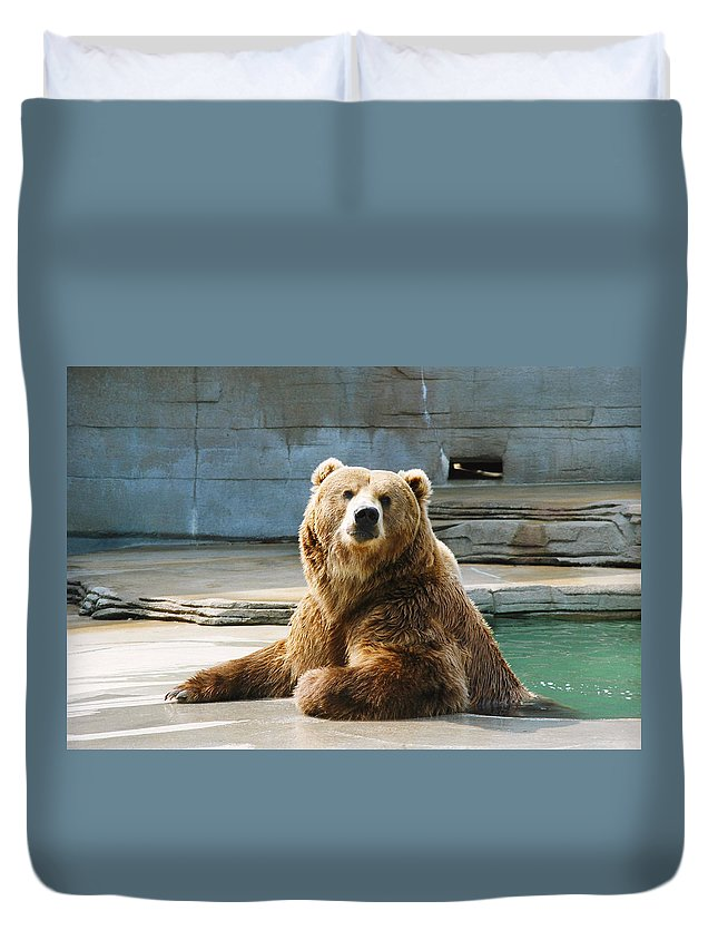 Bear Duvet Cover featuring the photograph Who Me by CJ Clark