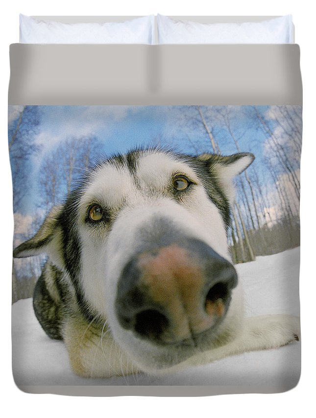 Light Duvet Cover featuring the photograph Wide Angle Dog by Darwin Wiggett