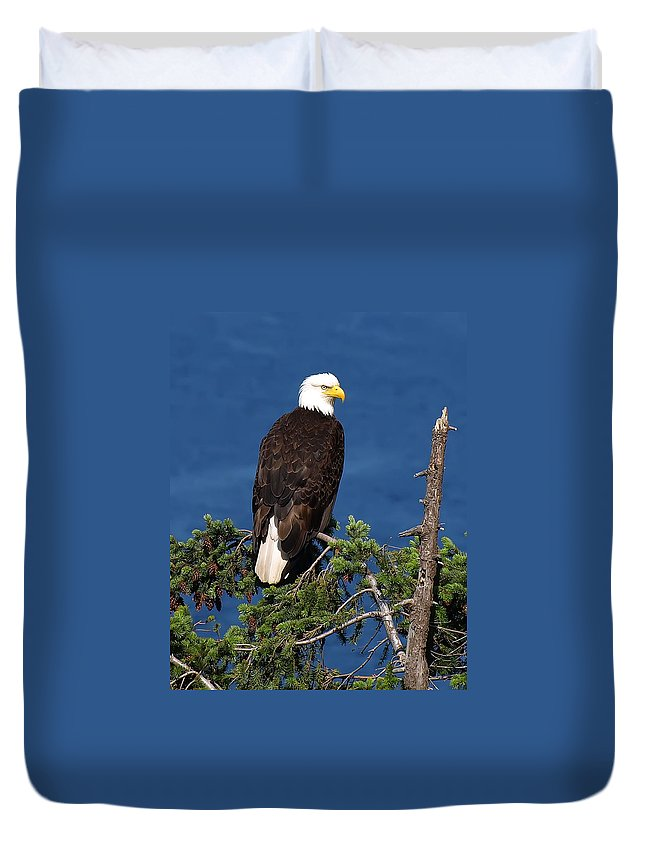 Bald Eagle Duvet Cover featuring the photograph Wild Bald Eagle On Fir Tree by Derek Holzapfel