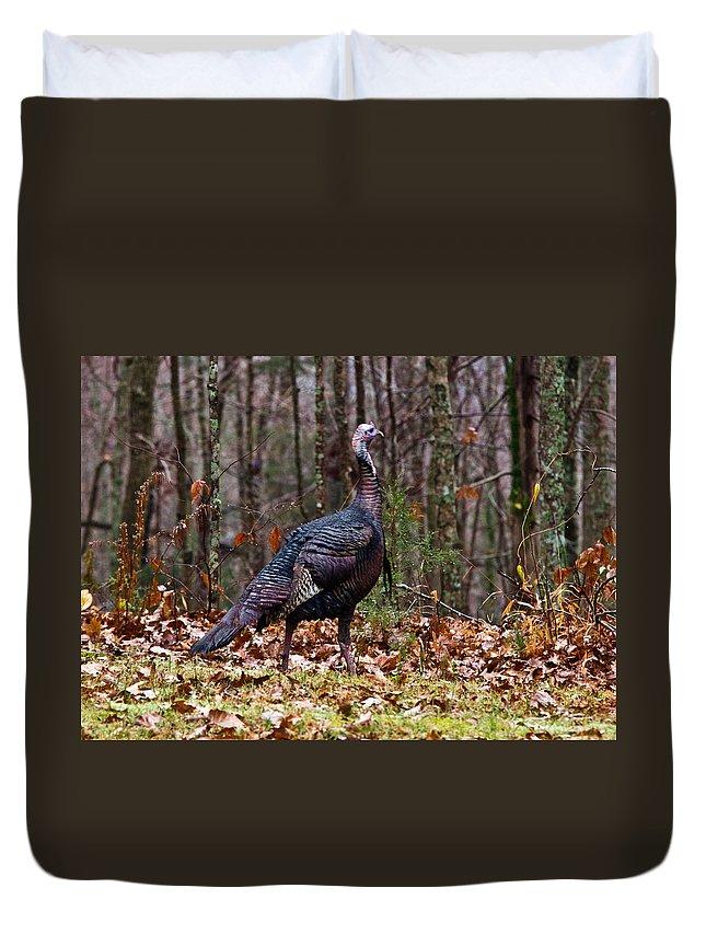 Wild Duvet Cover featuring the photograph Wild Tom Turkey by Douglas Barnett