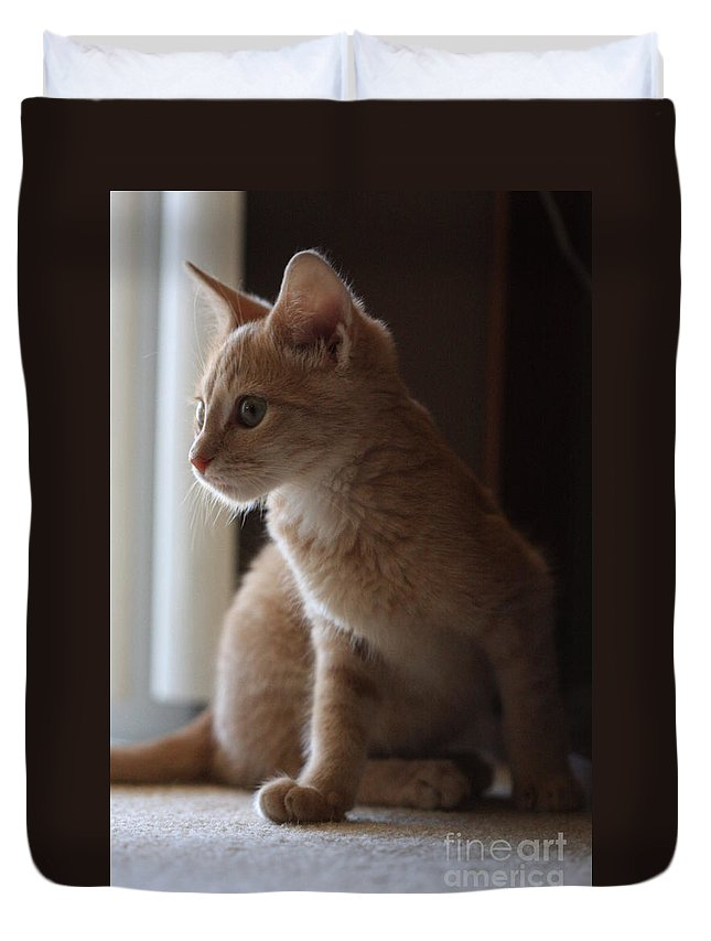Kittens Duvet Cover featuring the photograph Window Light by Kim Henderson