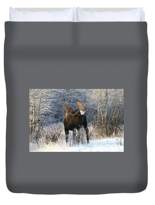 Alaska Duvet Cover featuring the photograph Winter Bull by Doug Lloyd