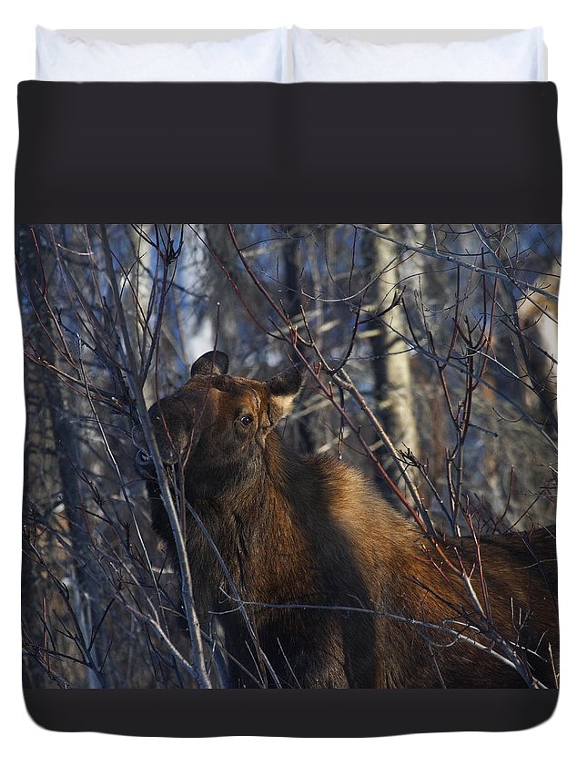 Alaska Duvet Cover featuring the photograph Winter Food by Doug Lloyd