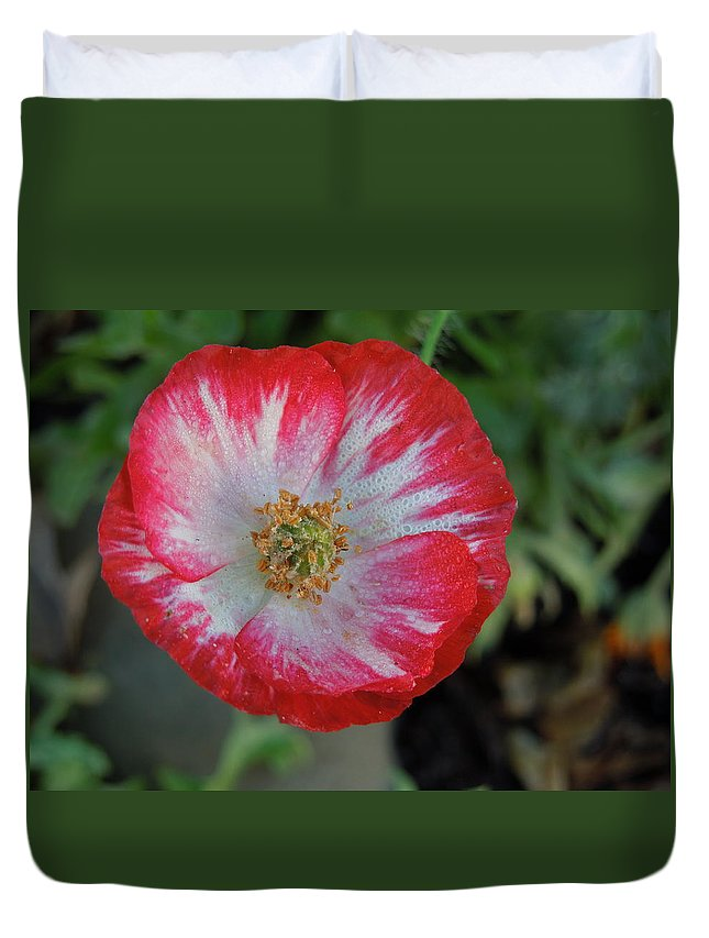 Flowers Duvet Cover featuring the photograph Winter Poppy by Diana Hatcher