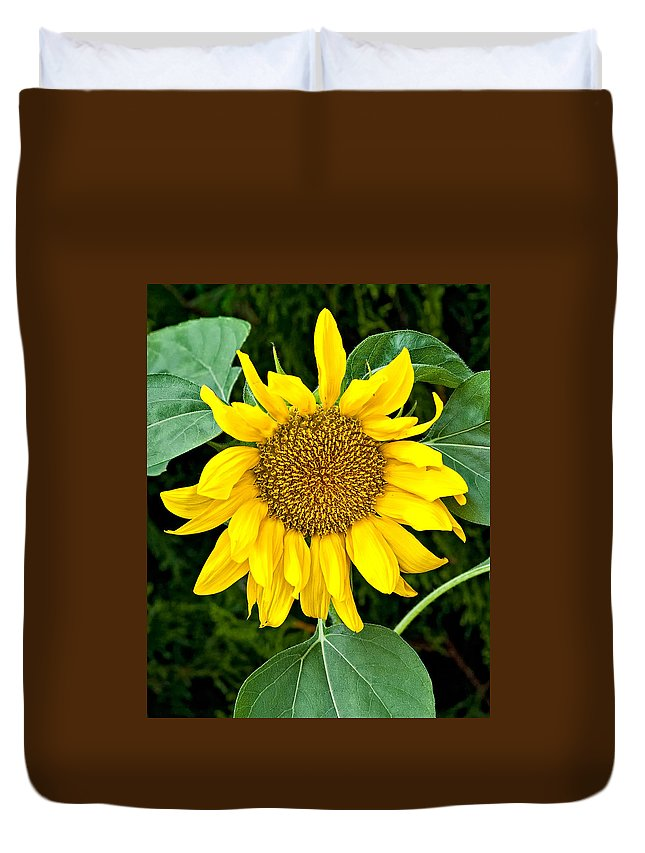 Flowers Duvet Cover featuring the photograph Wistful One by Steve Harrington