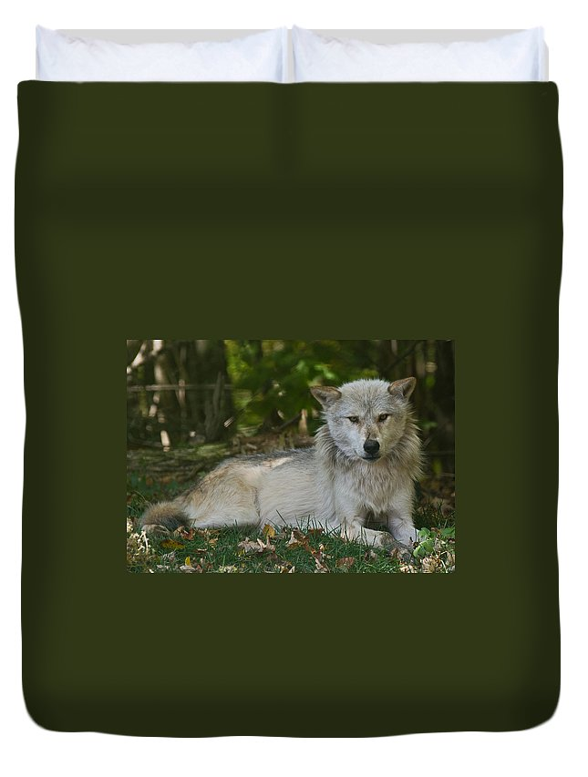 Wolf Duvet Cover featuring the photograph Wolf by Cale Best