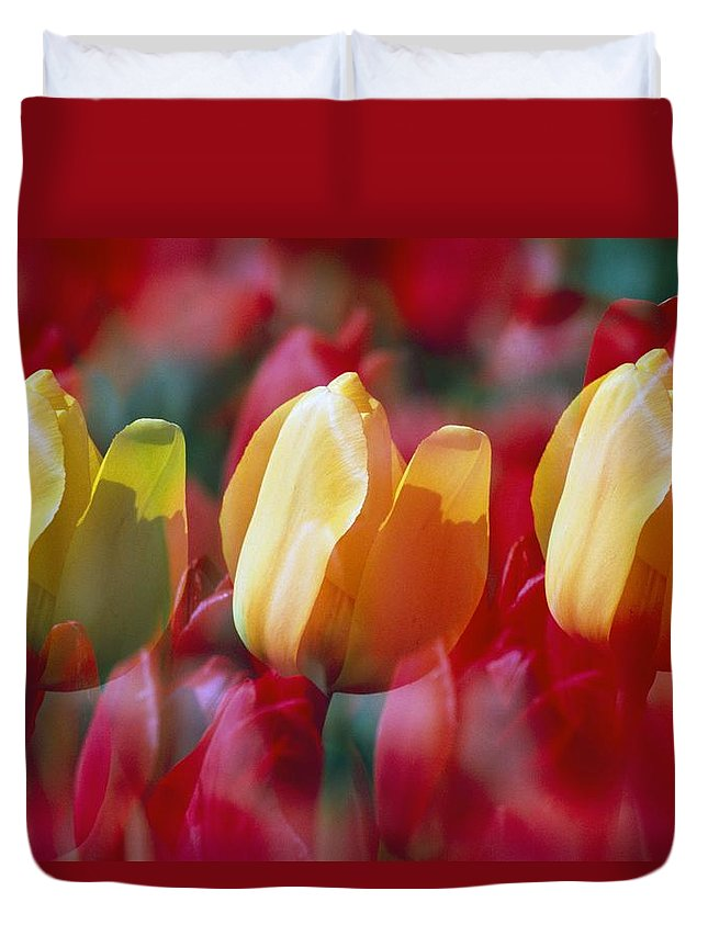 Outdoors Duvet Cover featuring the photograph Yellow And Red Tulip Blooms by Natural Selection Craig Tuttle