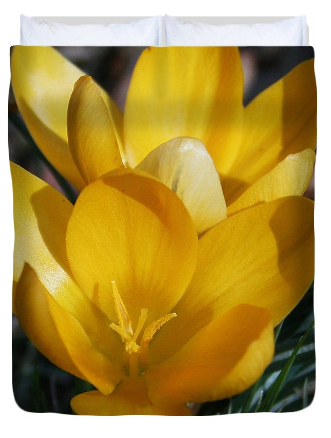 Yellow Duvet Cover featuring the photograph Yellow Crocus by Karen Harrison
