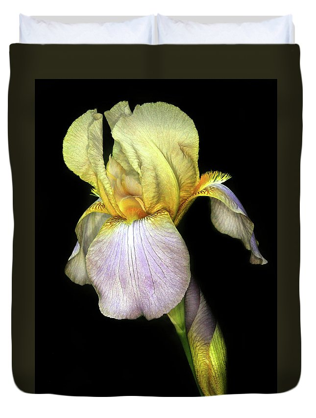 Iris Duvet Cover featuring the photograph Yellow Iris by Dave Mills