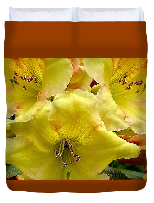 Yellow Duvet Cover featuring the photograph Yellow Rhododendron Trio by Peter Mooyman