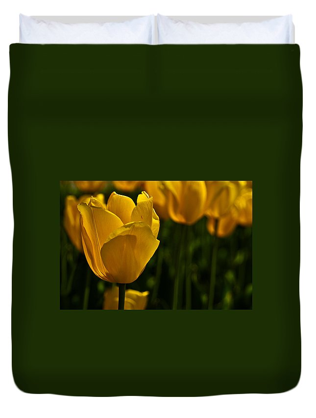 Tulip Duvet Cover featuring the photograph Yellow Tulips by Onyonet Photo Studios