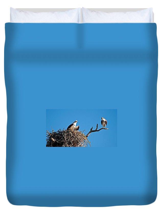 Osprey Duvet Cover featuring the photograph You Lookin At Me by Christine Stonebridge