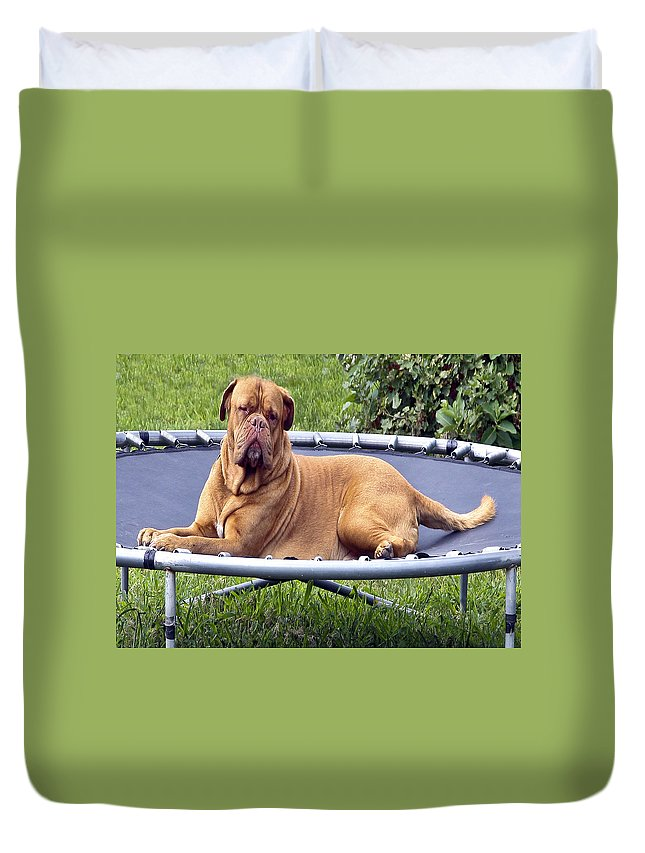 Very Large Dog Duvet Cover featuring the photograph You Want To Do What by Burney Lieberman