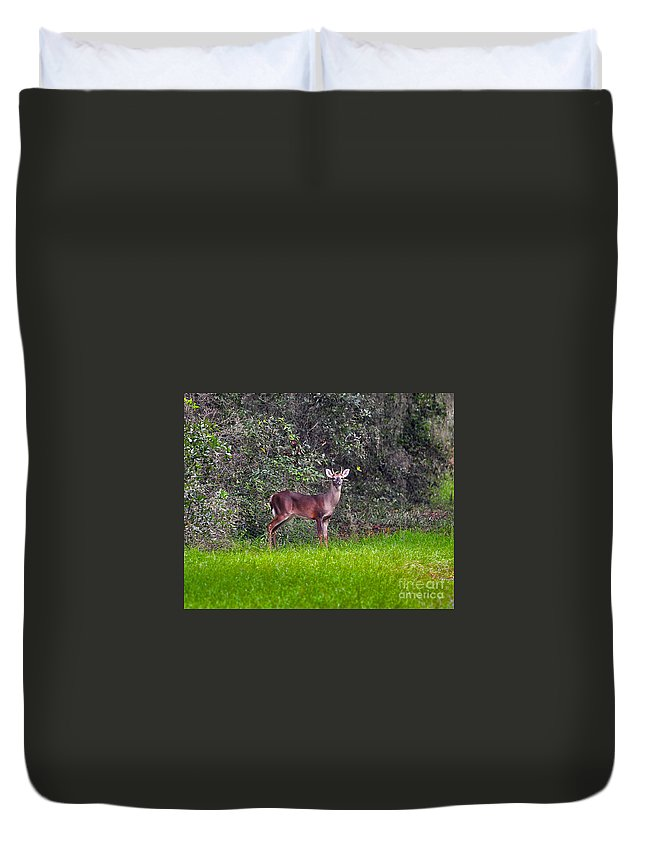 Deer Duvet Cover featuring the photograph Young Buck by Al Powell Photography USA