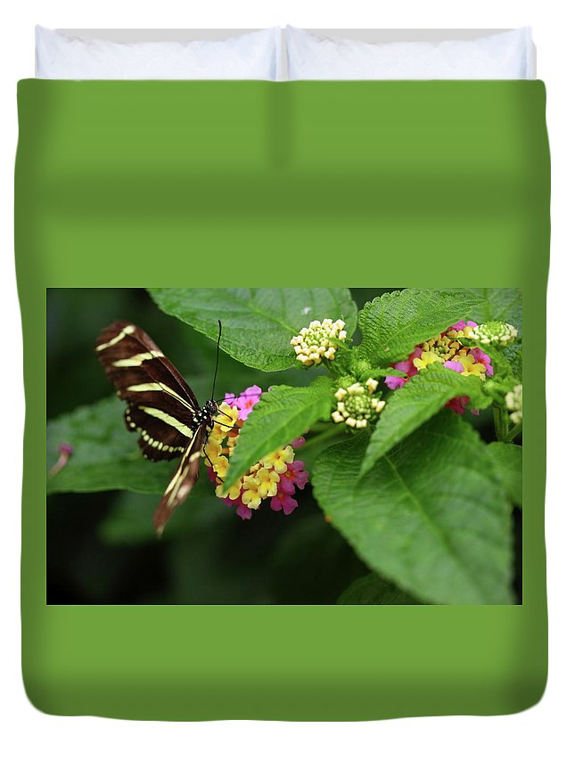 Butterfly Duvet Cover featuring the photograph Zebra Longwing by Rick Berk