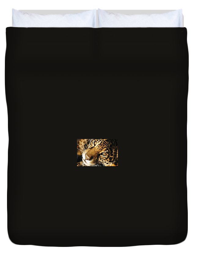 Jaguar Face. Duvet Cover featuring the photograph       Waiting by Leandro Sebastian  Marquez