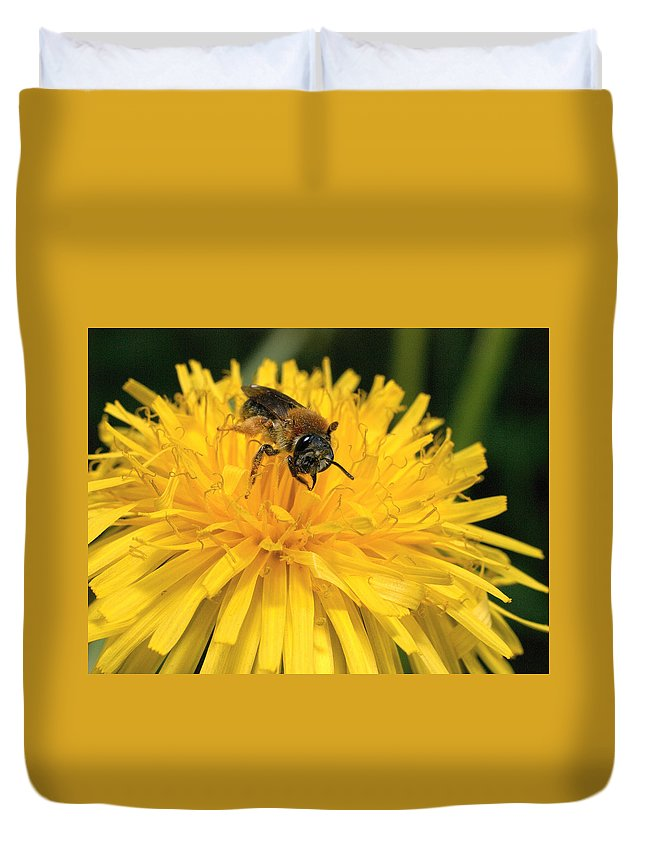 Lehtokukka Duvet Cover featuring the photograph A Bee In A Dandelion by Jouko Lehto