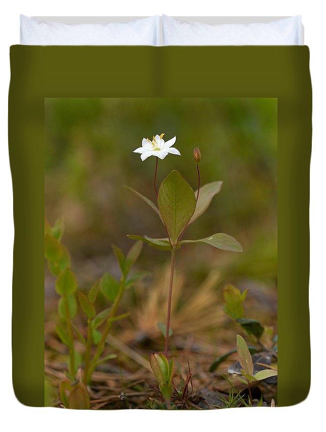 Lehtokukka Duvet Cover featuring the photograph Arctic Starflower by Jouko Lehto