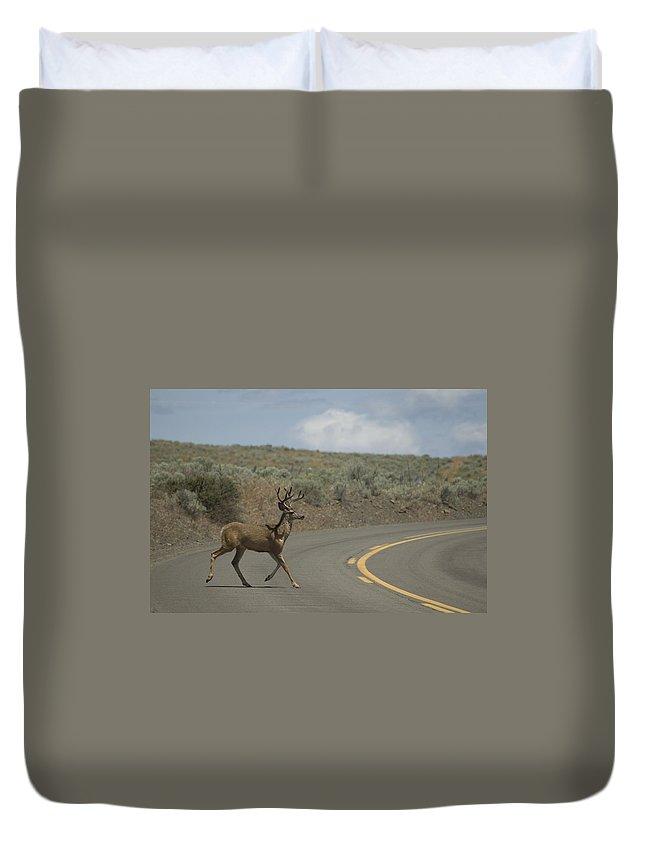 Buck Duvet Cover featuring the photograph Deer 1 by Sara Stevenson
