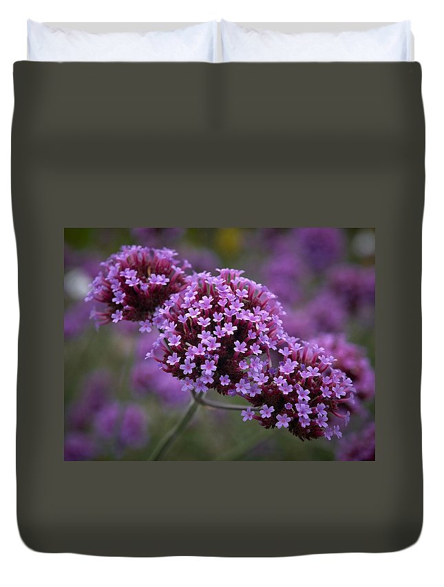 Lehtokukka Duvet Cover featuring the photograph Purpletop Vervain by Jouko Lehto