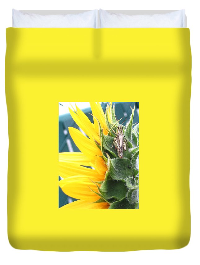Sunflower Duvet Cover featuring the photograph ... Small Break by Line Gagne