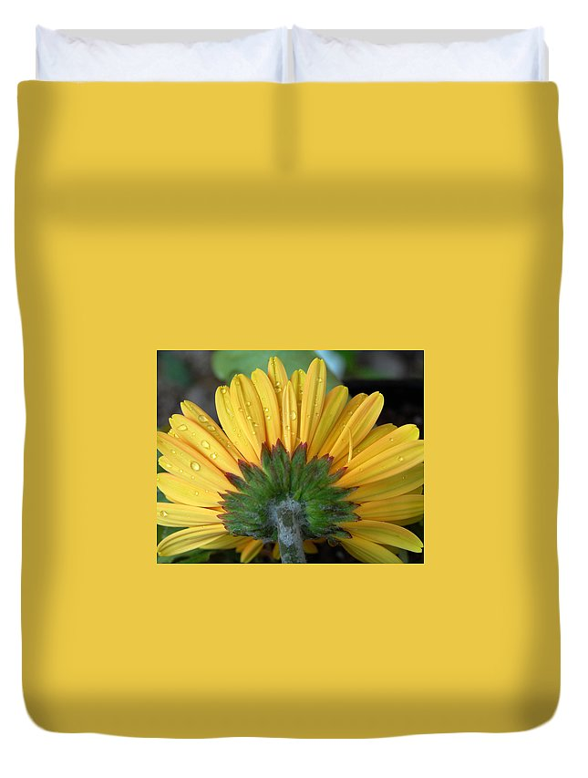 Flowers Duvet Cover featuring the photograph Water Drops On Gerbera Daisy by Amy Fose