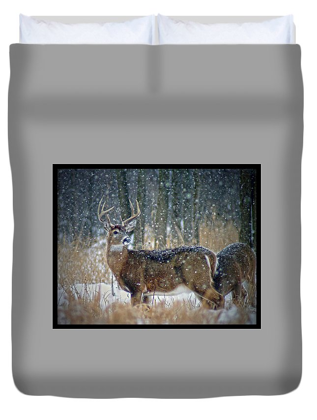 Deer Duvet Cover featuring the photograph 011110-4-a by Mike Davis