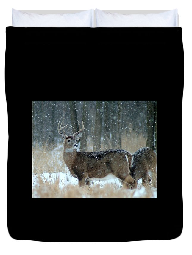 Deer Duvet Cover featuring the photograph 011110-40 by Mike Davis
