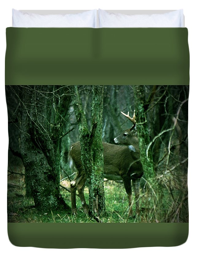 Deer Duvet Cover featuring the photograph 030807-1 by Mike Davis