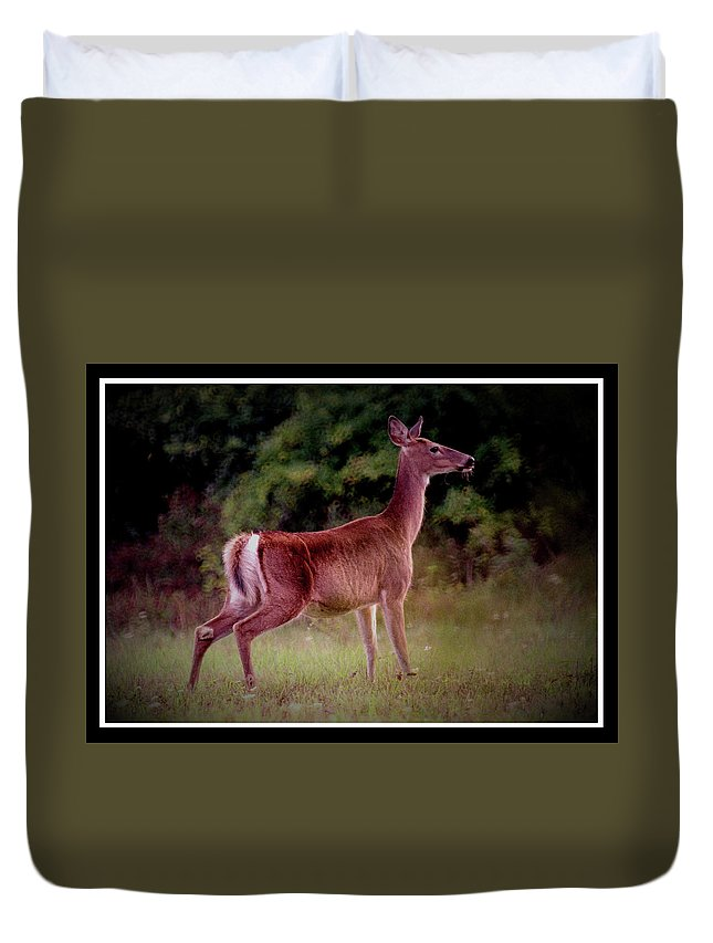 Deer Duvet Cover featuring the photograph 070406-57 by Mike Davis