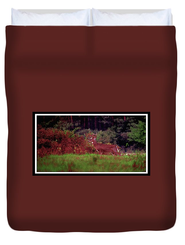 Deer Duvet Cover featuring the photograph 070406-64 by Mike Davis