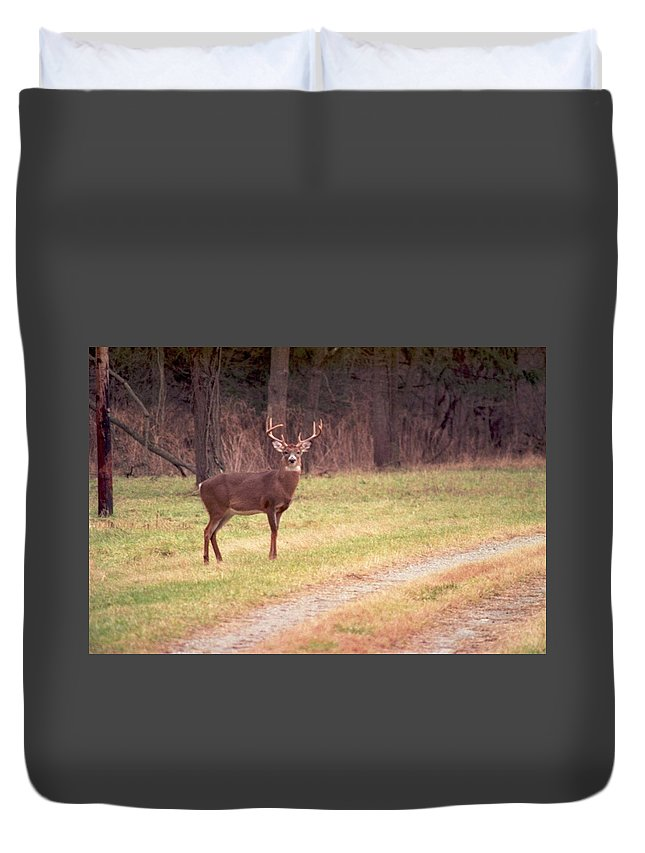 Deer Duvet Cover featuring the photograph 070506-17 by Mike Davis
