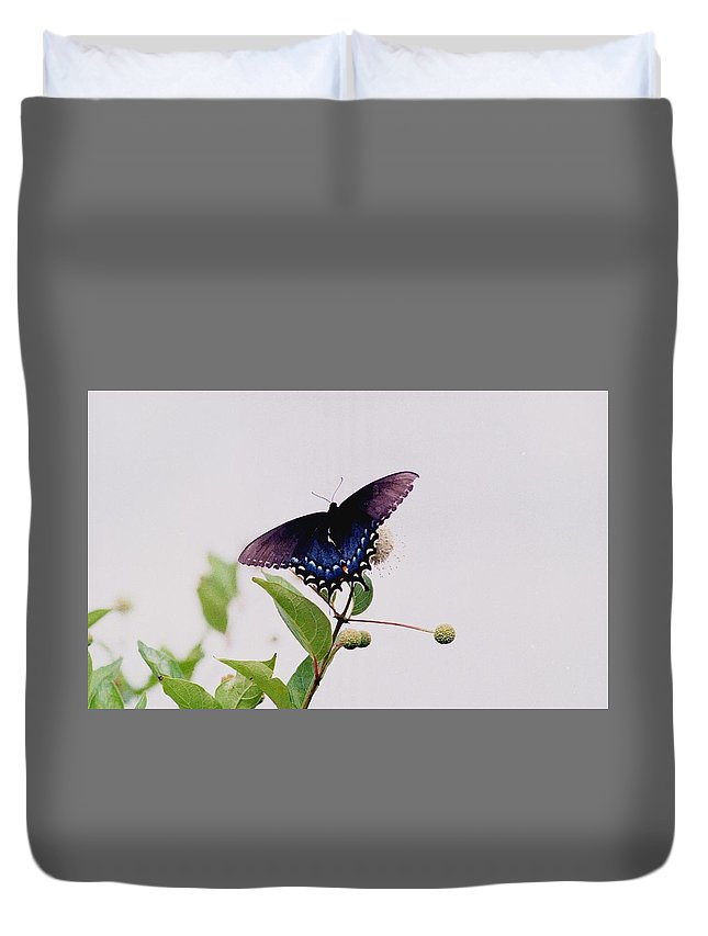 Butterfly Duvet Cover featuring the photograph 080706-5 by Mike Davis