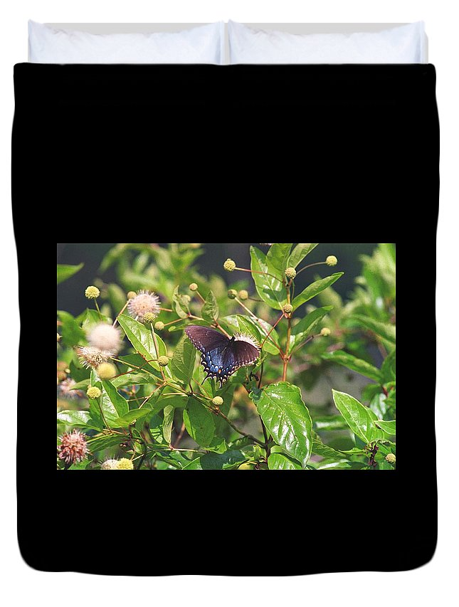 Butterfly Duvet Cover featuring the photograph 080706-6 by Mike Davis