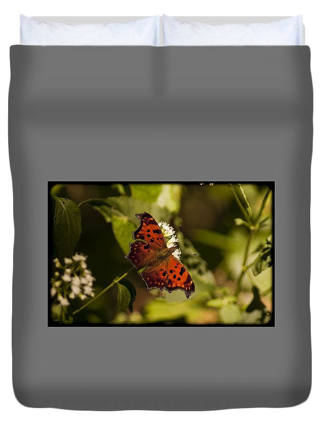 Butterfly Duvet Cover featuring the photograph 092015-52 by Mike Davis