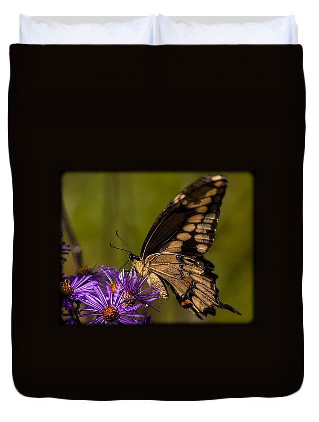 Butterfly Duvet Cover featuring the photograph 092015-79 by Mike Davis