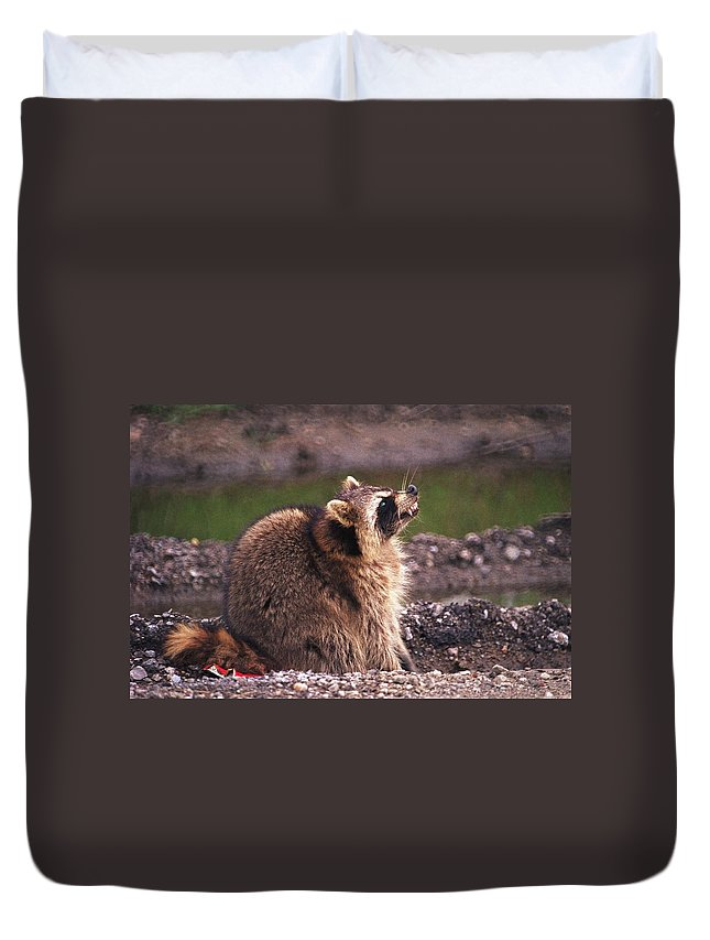 Raccoon Duvet Cover featuring the photograph 070406-67 by Mike Davis