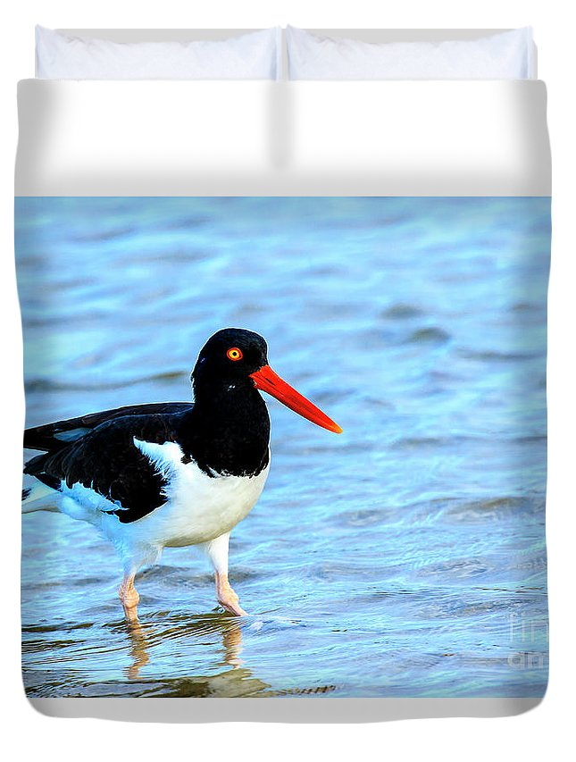 American Oystercatcher Duvet Cover featuring the photograph American Oystercatcher by Ben Graham