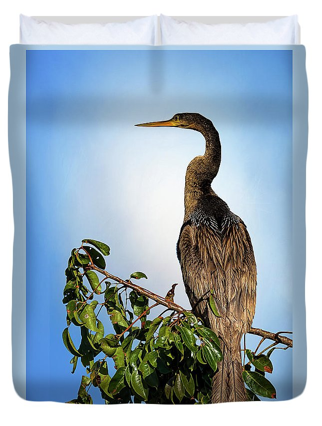 Florida Duvet Cover featuring the photograph Anhinga by Cyndy Doty